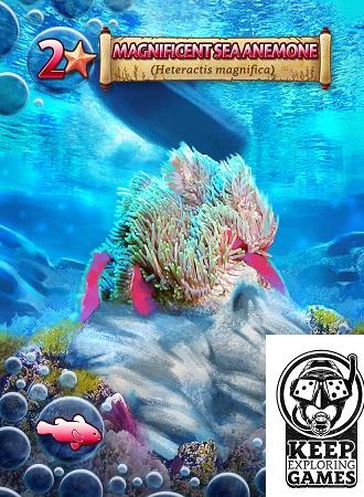 Scuba card: magnificant sea anemone